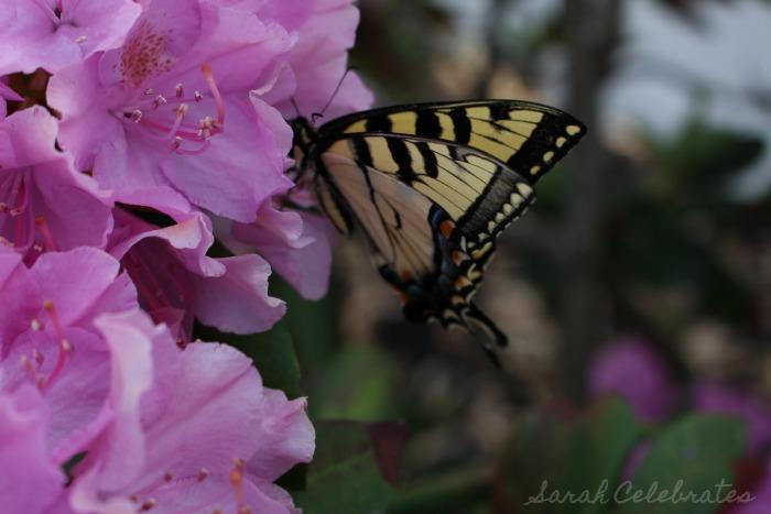 SCsundaysnap - Butterfly Landed - Sarah Celebrates