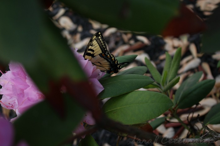 SCsundaysnap - Butterfly - Sarah Celebrates