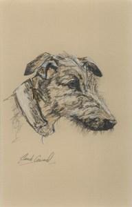 Lurcher - sketch of the head