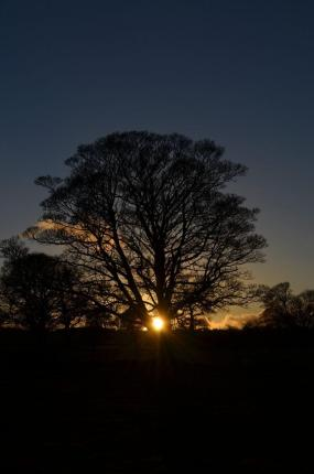 Tree at the winter solstice with sun low in the sky behind it