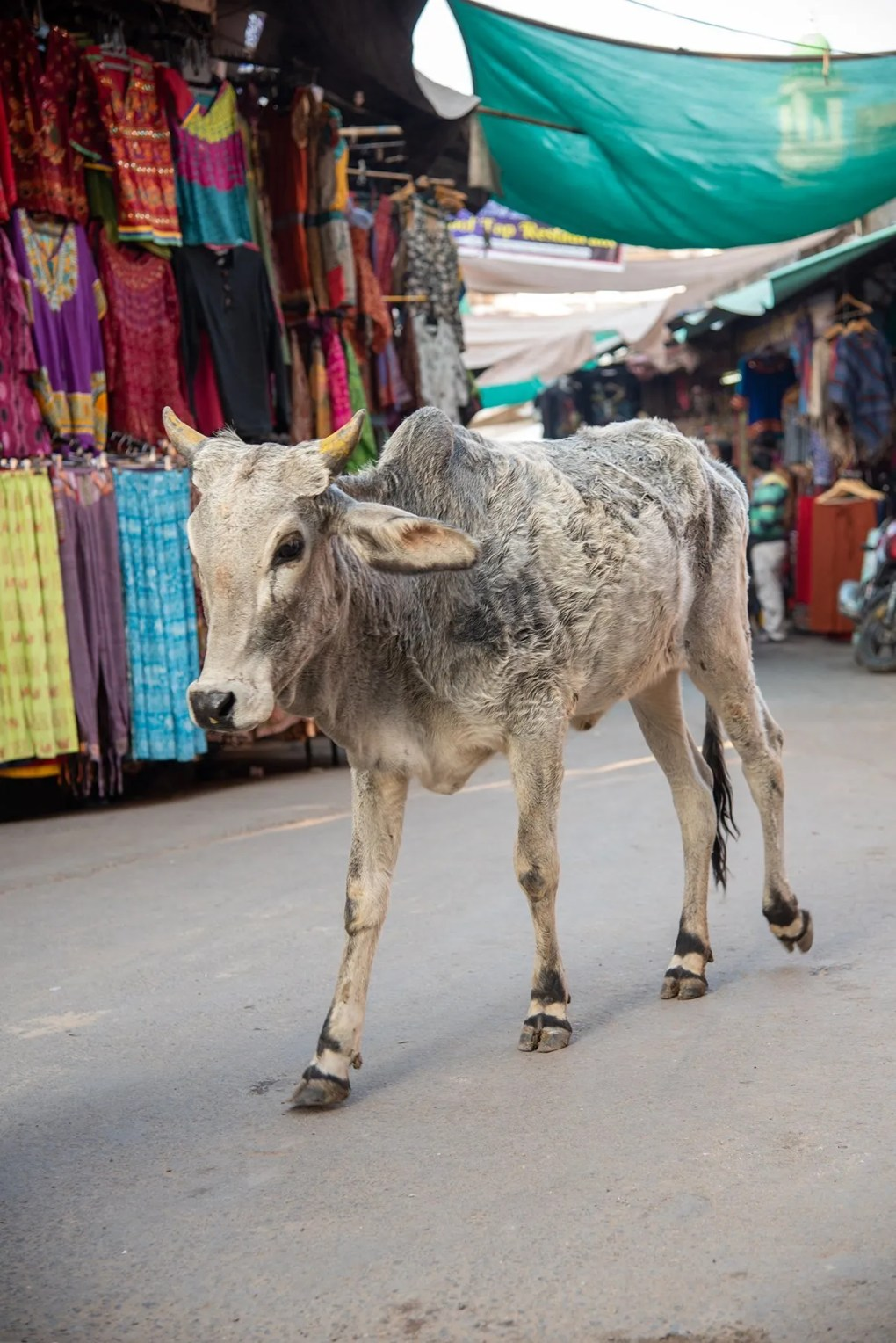 10 nuttige tips voor je trip naar Rajasthan in India
