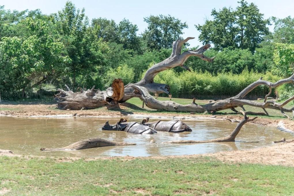 de zoo van la flèche in Vallée du Loir