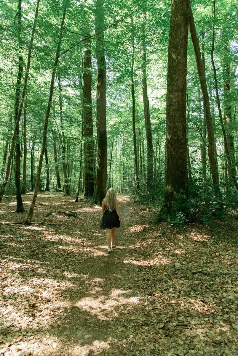 Bercé forest, Vallée du Loir