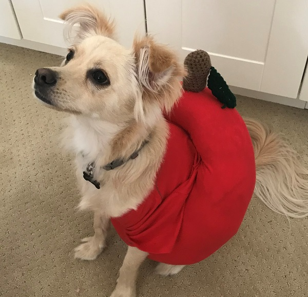 Poison Apple Dog Costume