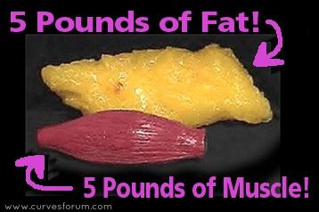 muscle-vs-fat_curvesforum