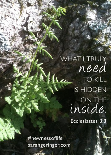 How to kill your hidden sins. #newnessoflife #bible #biblestudy