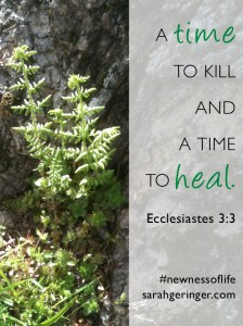 A time to kill and a time to heal. Eccl. 3:3 #newnessoflife #bible