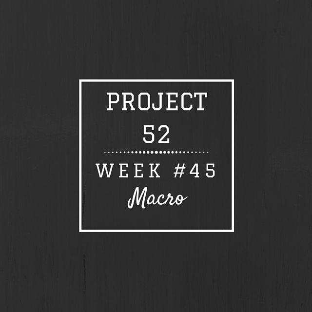 Project52week46
