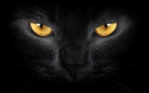 Black-Cat-eyes
