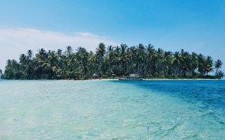 coconut trees on deserted island