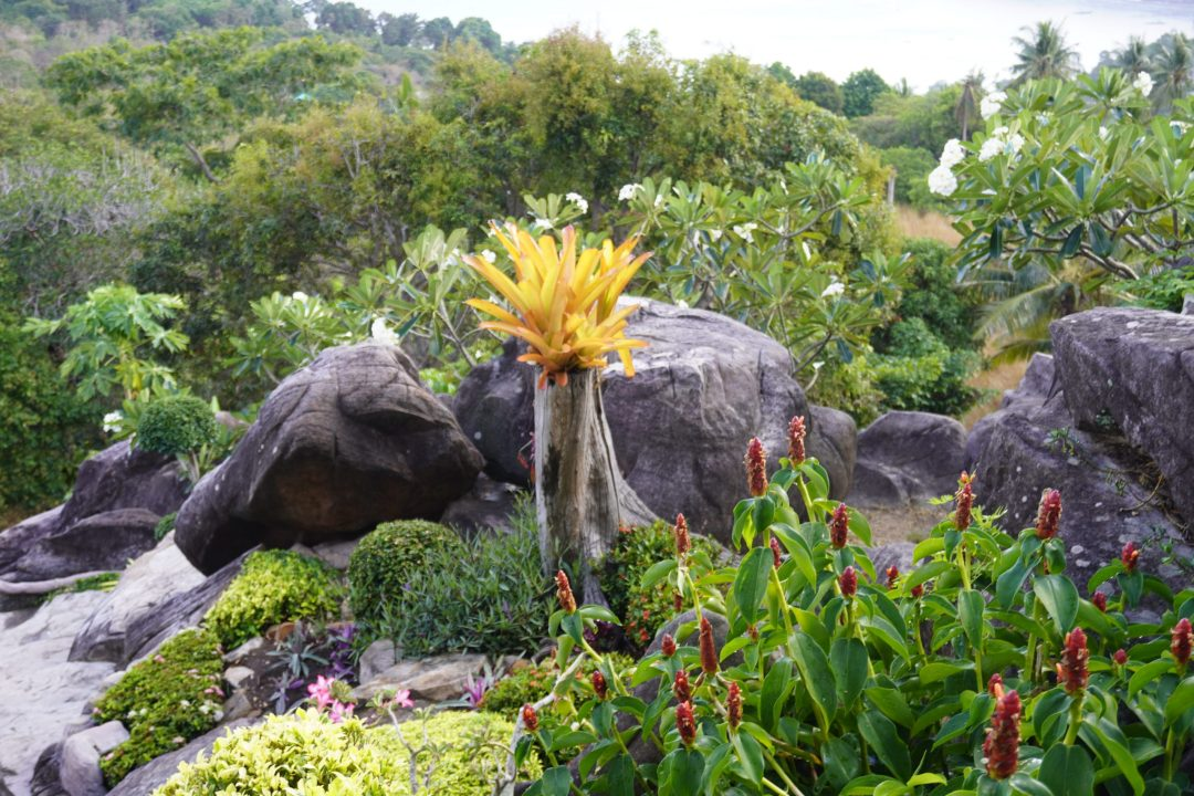 garden at Viewpoint 2 of Koh Phi Phi Don, Thailand