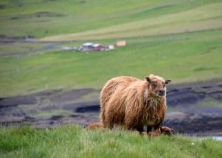 ICELAND_TUESDAY_DSC_0729_edit_resize