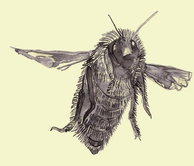 bee five_web