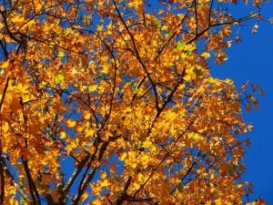 autumn-63271_640