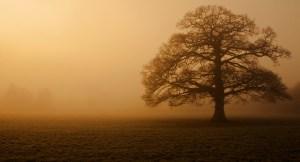orange oak