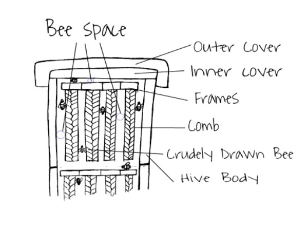 Beespace and Burr-comb,