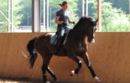 Sarah Sjoholm-Patience Horse Training Services
