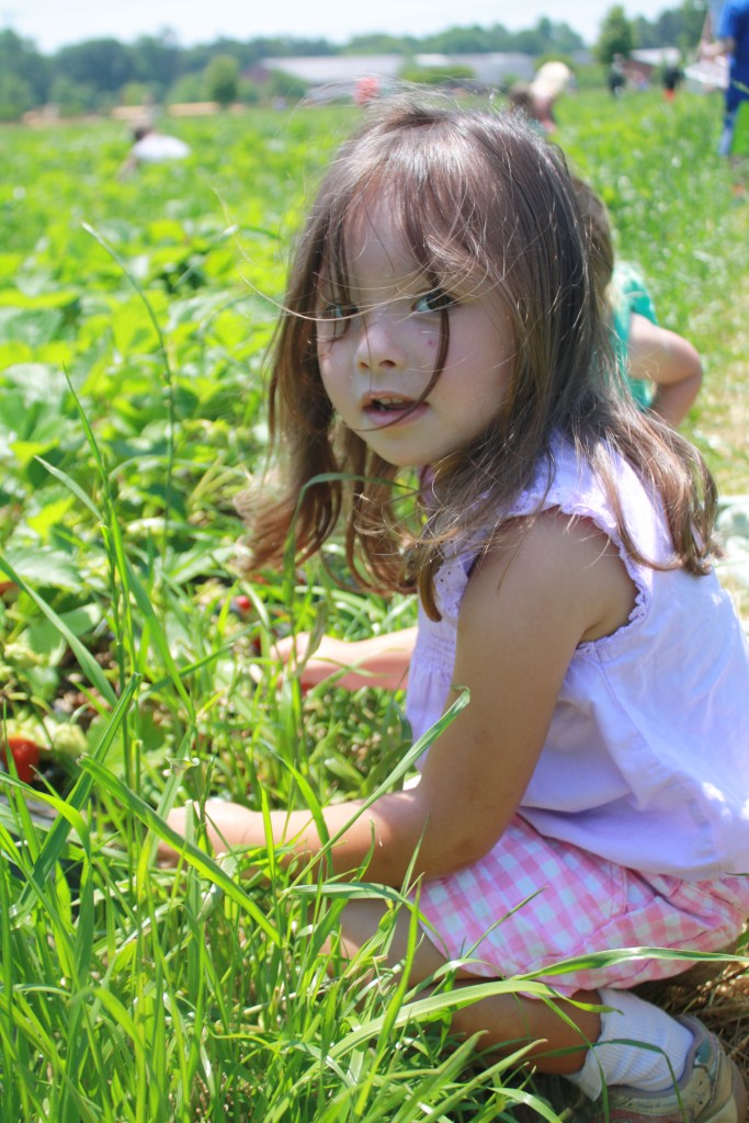 Spring Family Fun: Strawberry Picking || Sarah Sofia Productions