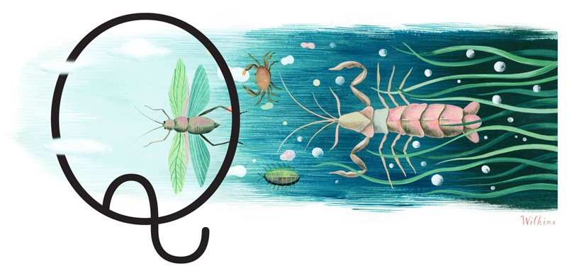 saah-Wilkins-smithsonian-Insect-evolution-web