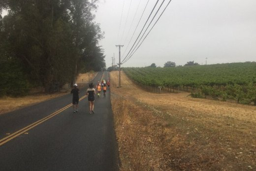 Runners on the road, running through a vineyard