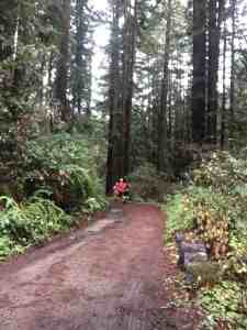 Woodside Ramble 35k