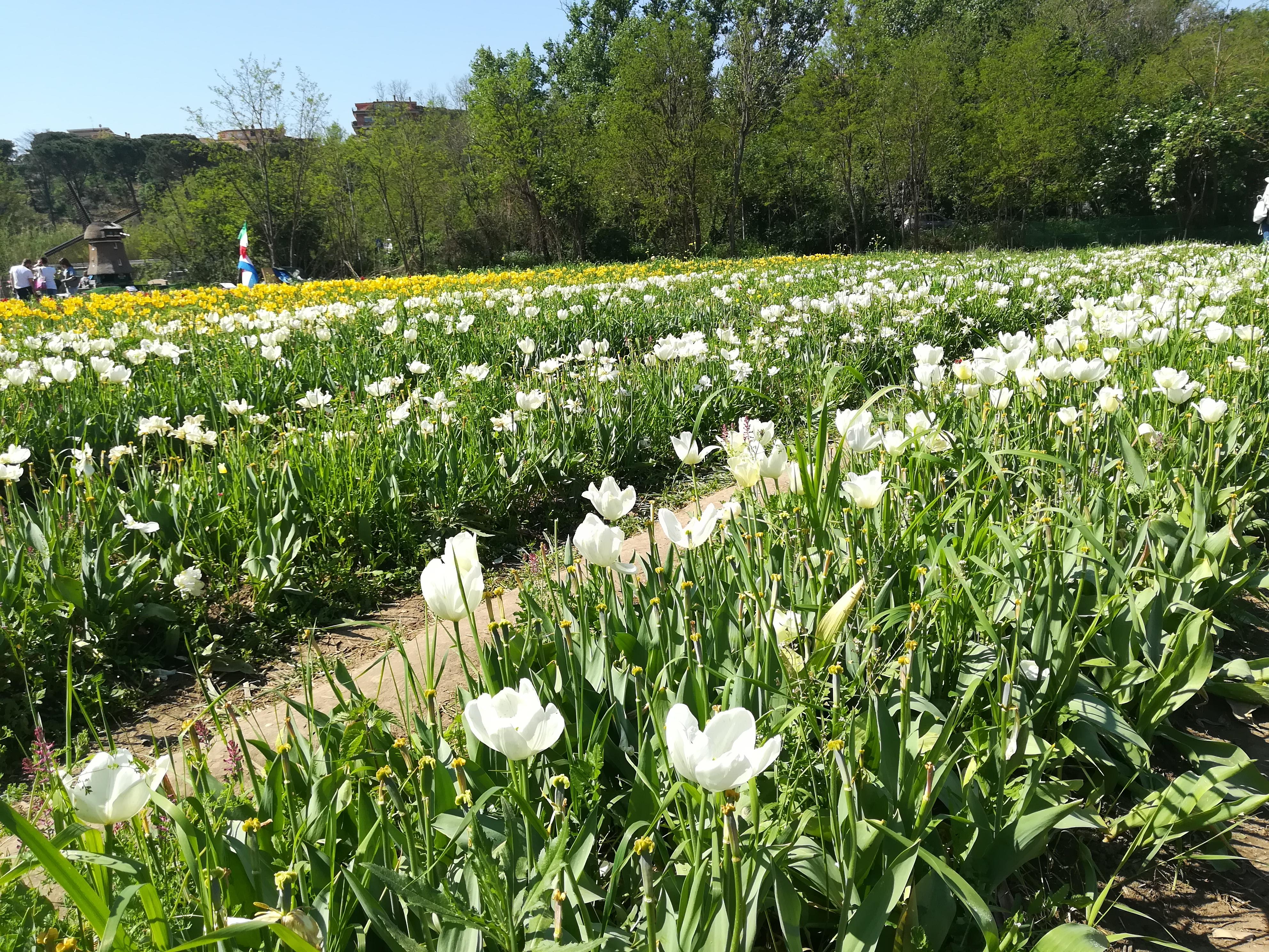 il giardino fiorito in stile olandese un vero Tuliflop