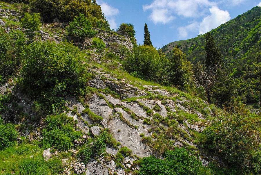 escursione-sul-monte-ingino-vegetazione