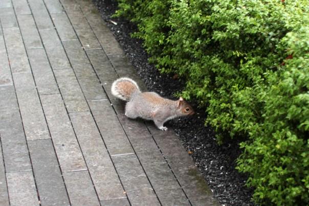 London squirtle chipmunk sarandaadriana blog