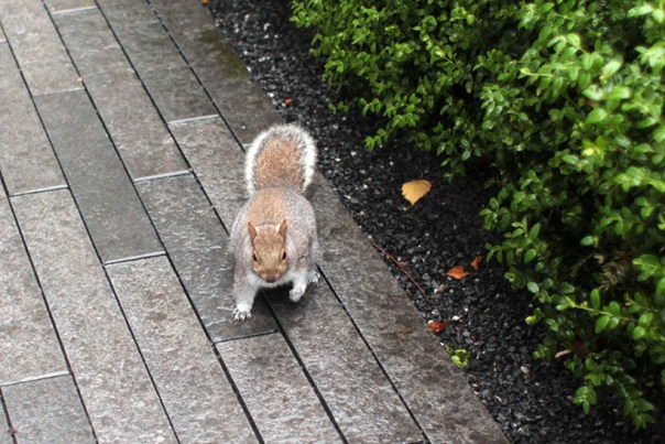 London squirtle chipmunk sarandaadriana blog1