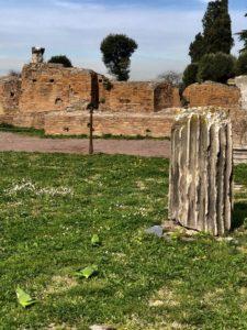 """Toby Regbo: buona fortuna... Coniglietti, ricci e pappagalli, i nuovi """"inquilini"""" del Parco del Colosseo (Ex ilmessaggero.it)"""