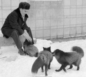 Toby Regbo: è in diretta! Dmitry Belyaev (1917 – 1985) genetista russo