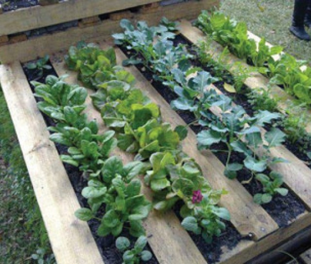 Make Use Of An Old Pallet To Plant Flowers And Vegetables Top Right Almost