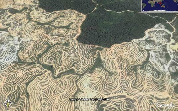 How Hamed's cousin Taib's plantation policies have affected Sarawak's jungle. Hamed is a top concession-holder.
