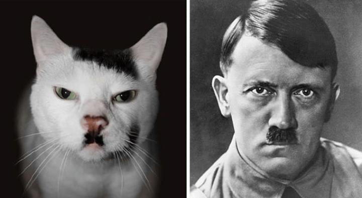 animals look like celebrities