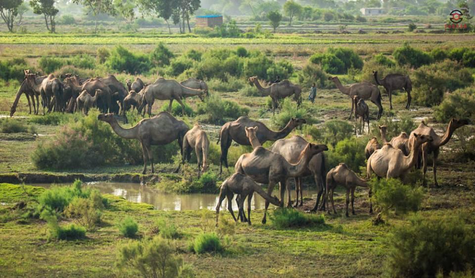 Gharo Sindh