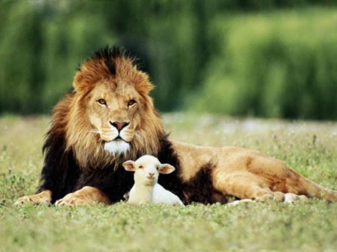 Leoni e pecore (di Antonio Moscatello)