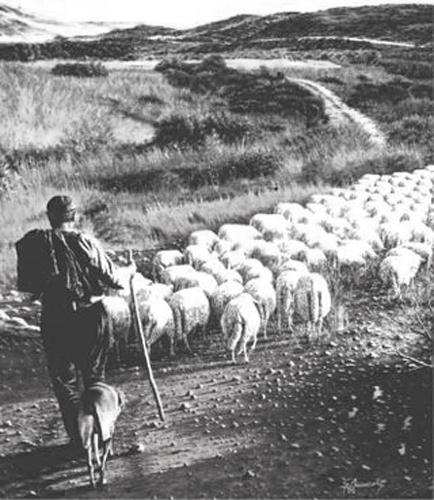 MdT: 10 marzo 1965 lo strano suicidio di Giuseppe Mureddu (di Romina Fiore)