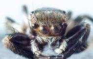 3 luglio 1837 nasce l'entomologo McCook (di Paola Mussinano)