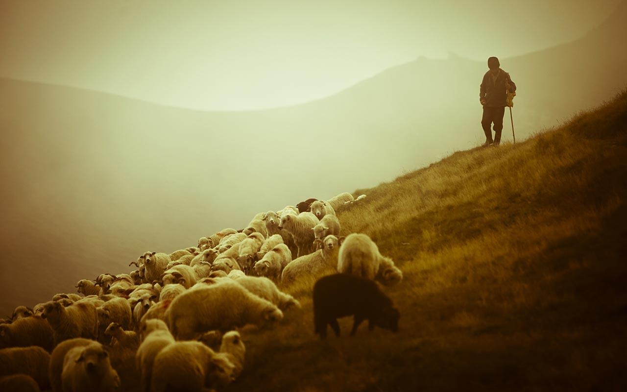 Canto notturno di un pastore errante della Sardegna