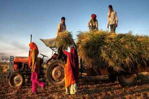 Farmer-suicides-Indian-farmers-Indian-news-India