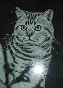Pet Memorials - Cat