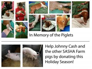 Pigs-Collage1