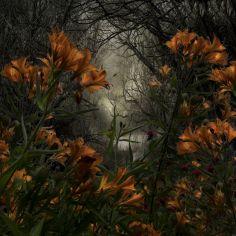 LandscapeFlowers#10
