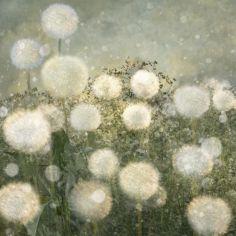 Landscape_Flowers#09