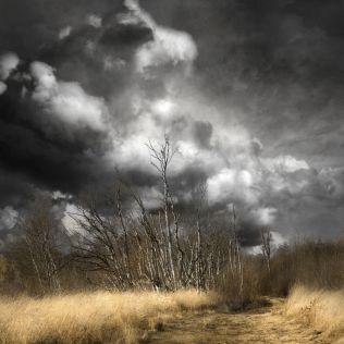 Saskia Boelsums, Landscape #148