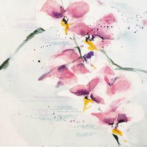 ORQUIDEA   ORQUÍDEA   Orchidaceae phalaenopsis