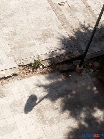 Marciapiedi rotti e alberi che aspettano di essere potati, la situazione di piazza Toscanini a Sassari