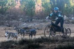 3 dog team - single lead