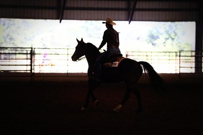 The Team Mate Arabian Horse