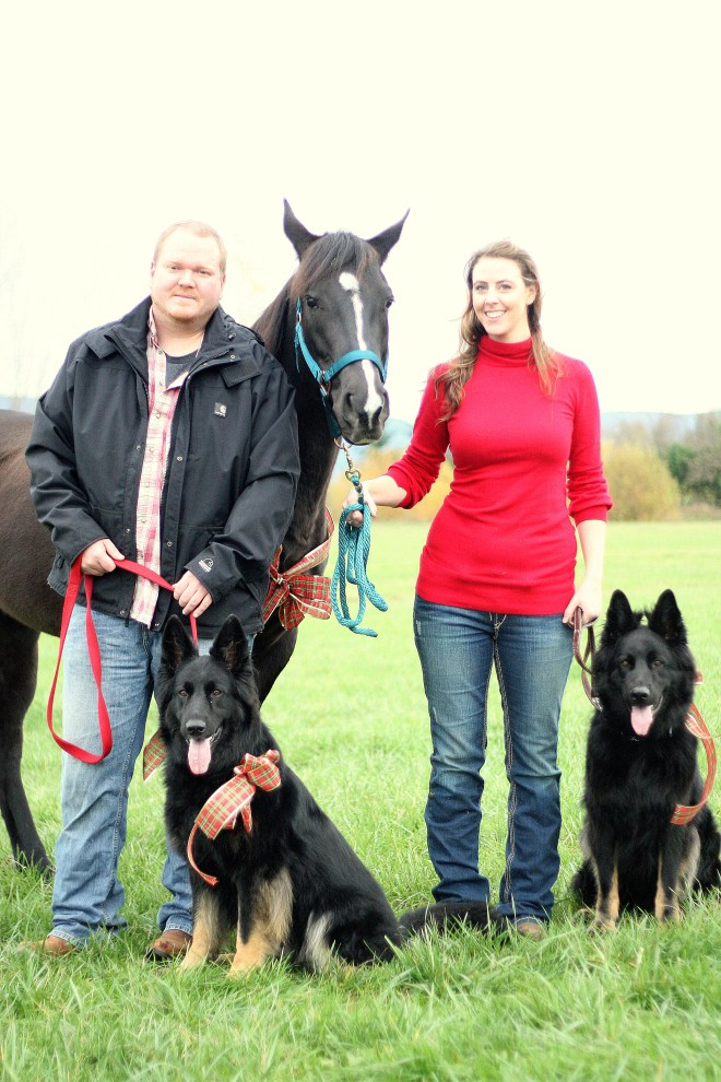 Arabian Horse & German Shepherd Dogs